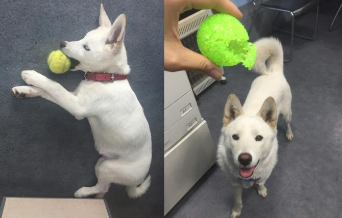 강아지가 공을 물고 뜯는 것은 행동유도성에 따른 행위일지도 모른다! - 오가희 기자 solea@donga.com 제공
